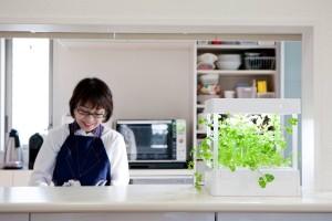 部屋で育つキッチン菜園
